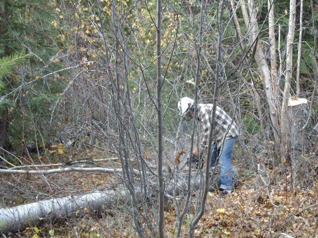 Cutting the Birch into rounds