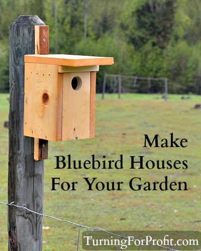 Bluebird house project