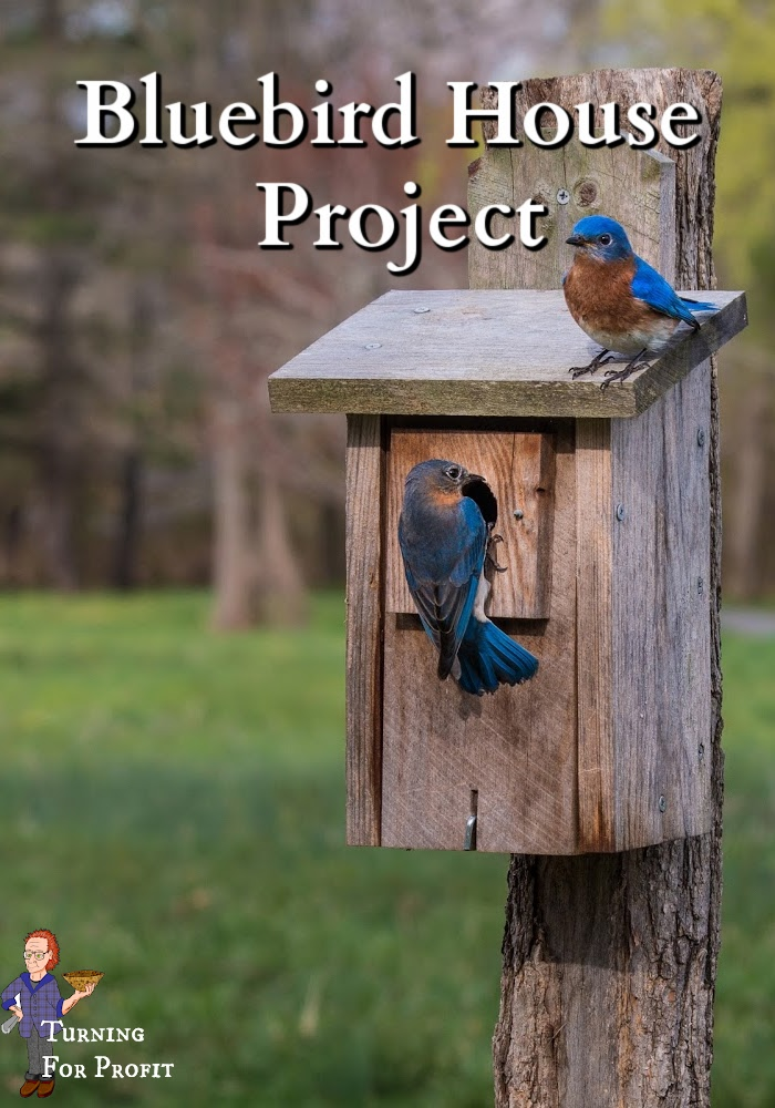 Two bluebirds sitting on a bluebird house
